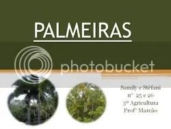 trabalho marcão palmeiras
