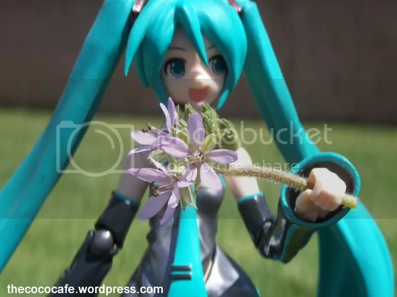 Miku in the grass