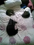 3 cats on Patti's bed