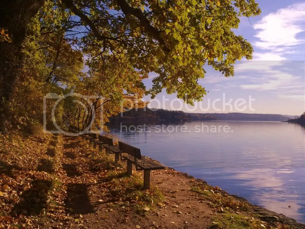 Beautiful fall colors on Sandvika shoreline