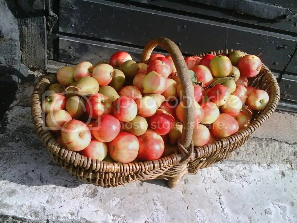 Crisp apples and fresh picked pears
