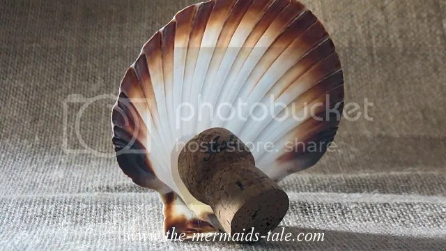 photo scallopstand1_zps13c10279.png