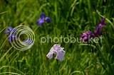photo DSC_7439.jpg