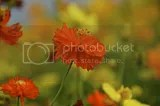 photo DSC_9929.jpg