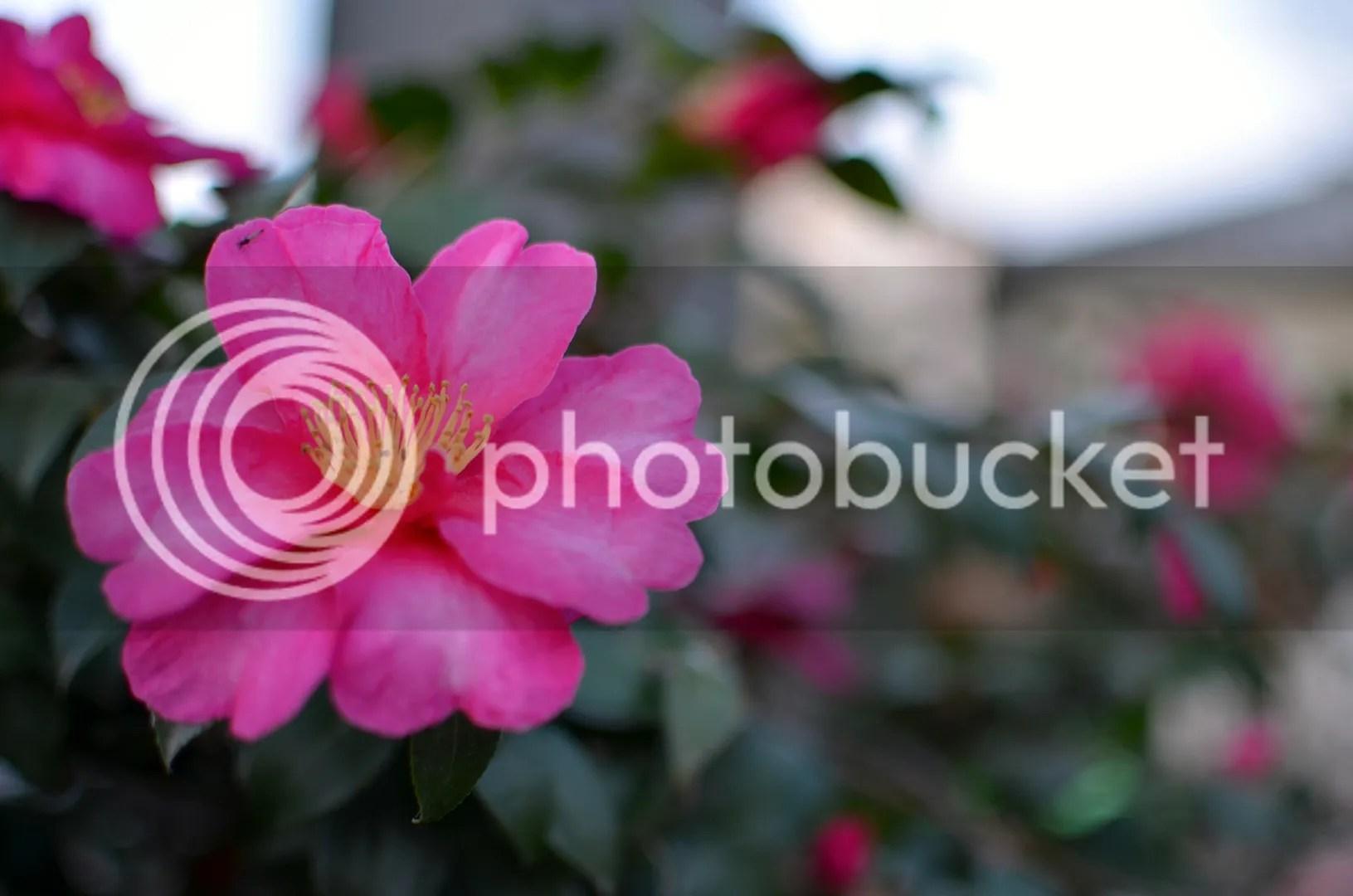 photo DSC_1503.jpg