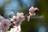 photo DSC_3080.jpg