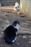 photo DSC_3266.jpg