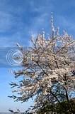 photo DSC_5600.jpg