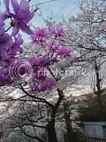 photo IMG_1247.jpg