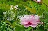 photo DSC_5961.jpg