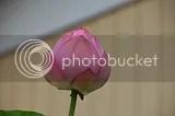 photo DSC_6268.jpg