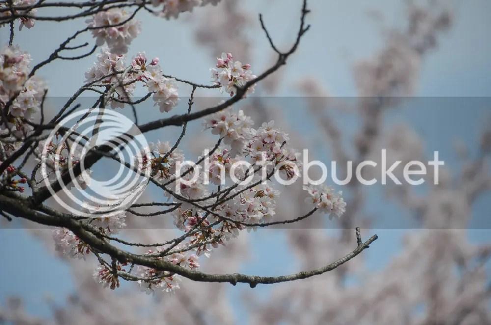photo 20160403_fujioka_05.jpg