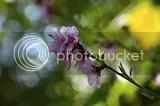 photo DSC_3243.jpg