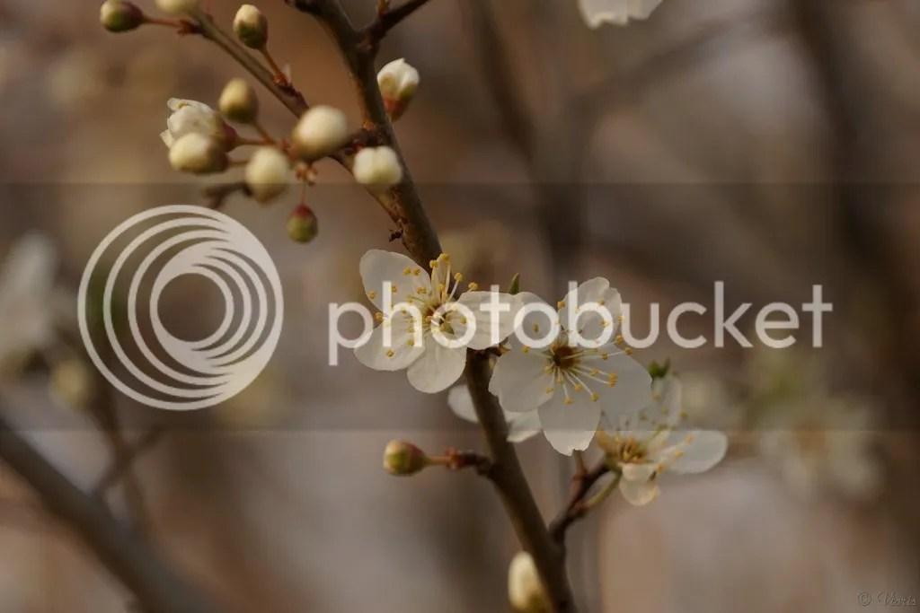 photo DSC04969.jpg