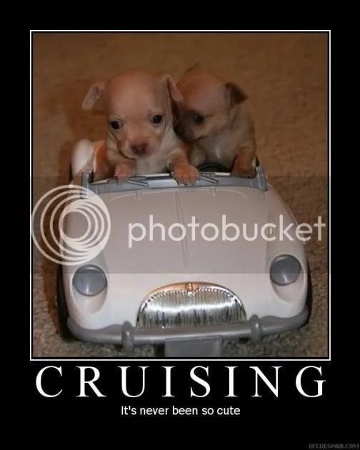 CutePuppyCruisingCarDogAdorable.jpg
