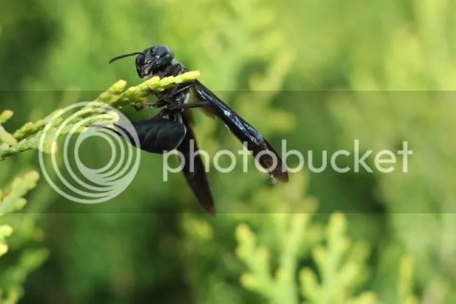 photo Attachment-1-7.jpg