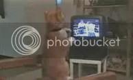 Mèo tập Boxing