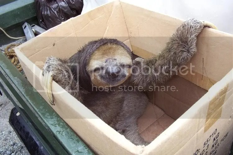 This picture has nothing to do with the post. SLOTH!!