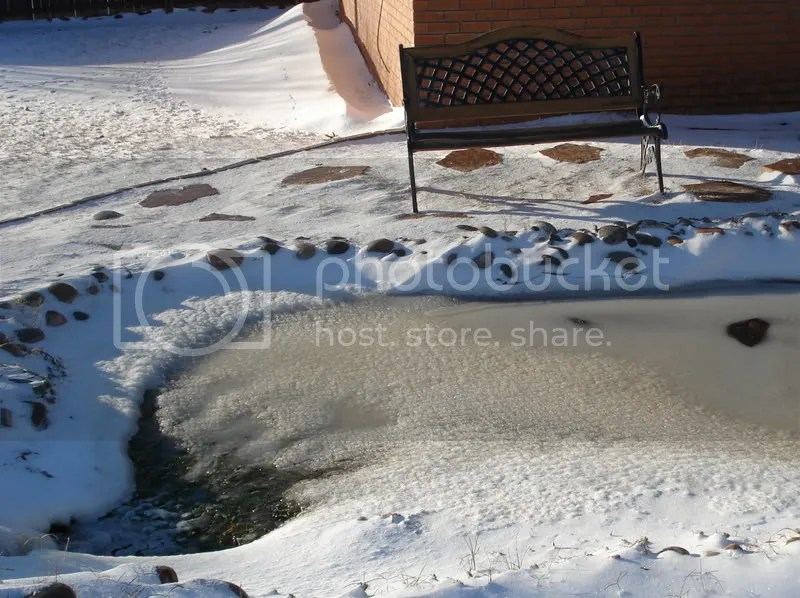 Frozen goldfish pond in my backyard