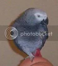 Rufus the Wonder Bird
