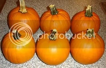 Six Pie Pumpkins