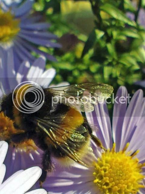 Bee on flower by zensesne