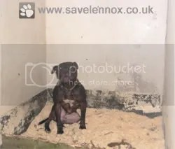 Lennox the dog impounded by Belfast City Council and kept in appalling conditions