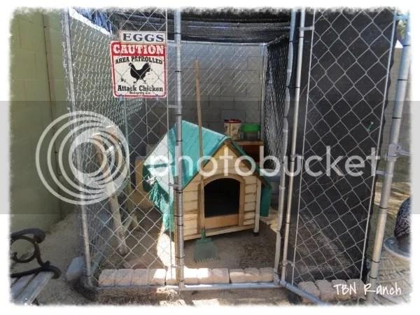Attached TBN Chicken Coop 9-19-13 photo 2013-09-19104620_zps116539ed.jpg