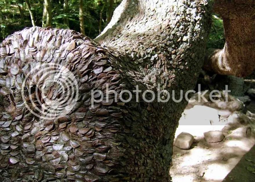 Pohon uang bukan sekedar legenda dan cerita namun benar benar ada
