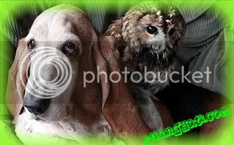 Anjing dan Burung Hantu