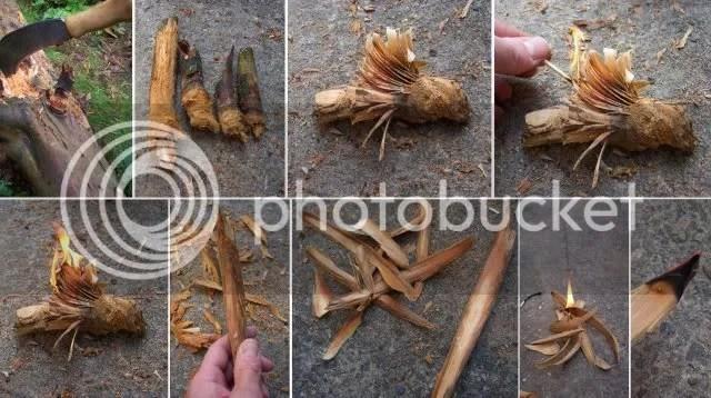 fat Pine knot fire starter