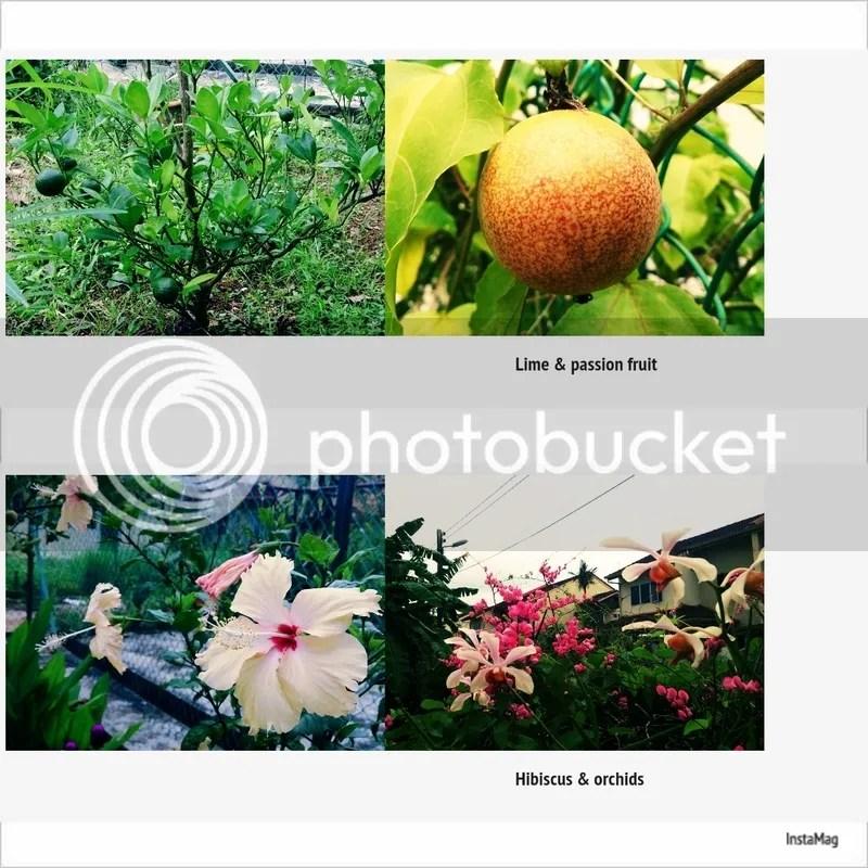 photo img1435463094258.jpg