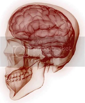 brain anatomy photo: 280820097 25254454.png