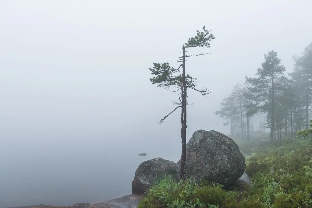 photo 150707-RHJ_9101.jpg