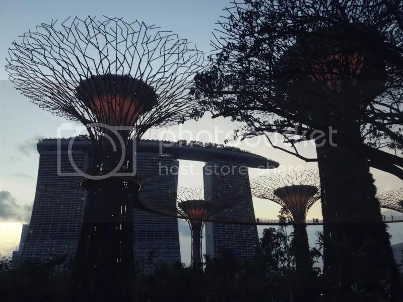 Supertree Grove of Gardens by the Bay Singapore