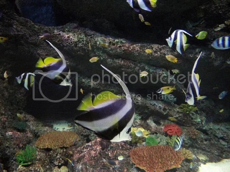 Colourful fishes in the largest aquarium in the world, as found on S.E.A. Aquarium, Resorts World Sentosa, Singapore
