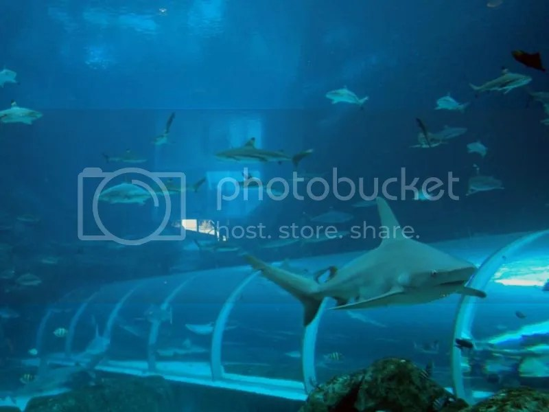 Sharks in S.E.A. Aquarium Sentosa
