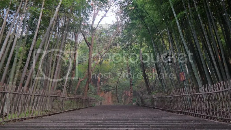 Bamboo Path, Precious Stone Hill, Hangzhou, China