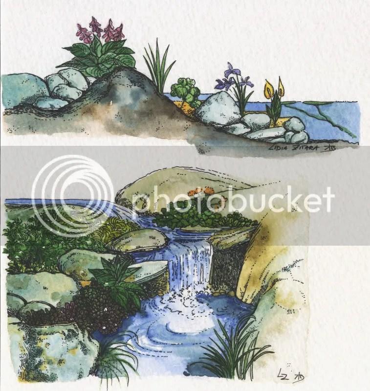 schema giardino roccioso umido