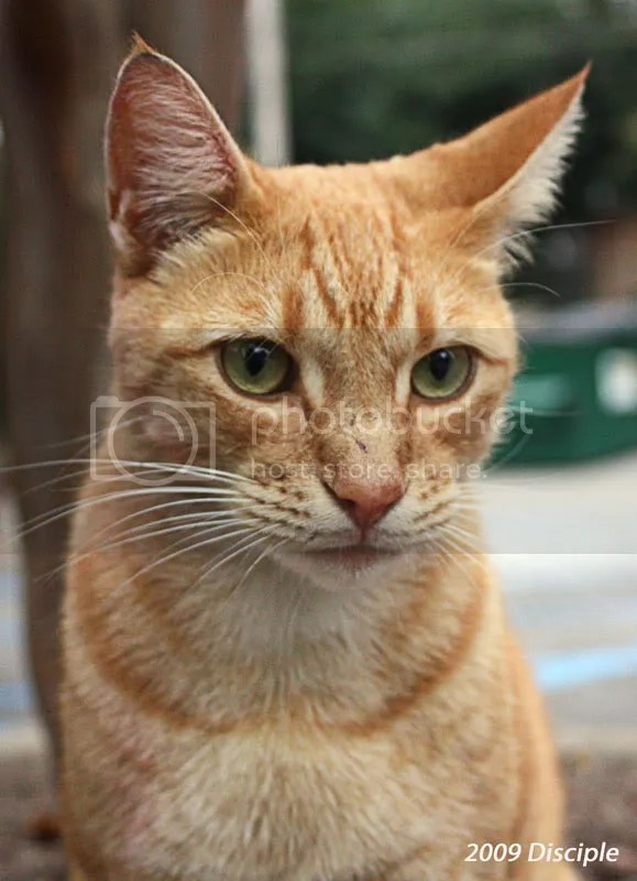 Close-up of our new mascot, Yellow Cat