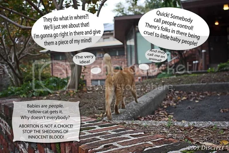 Yellow Cat takes action upon learning of abortion
