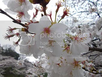 photo photokano_02_02_blog_import_529f130e91813_zps90ca729a.jpg