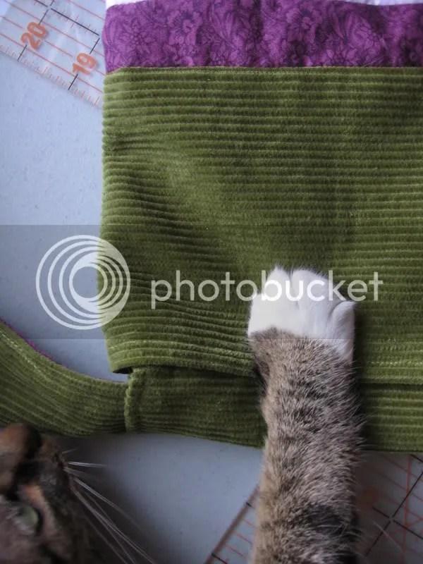 Nola's paw