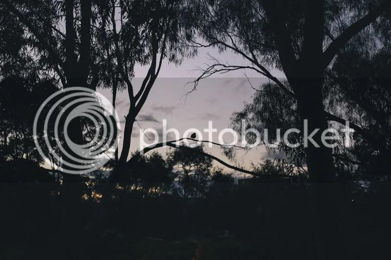 photo IMG_3363.jpg