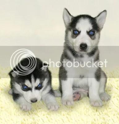 yunho puppy