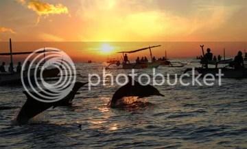 lumba-lumba di Lovina