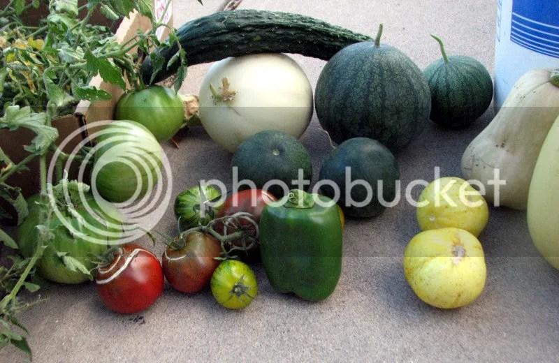 A Motley Crew of Summer Vegetables