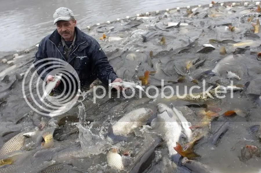 ловля рыбы на северке