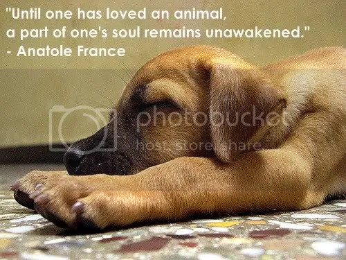 Animal Quote Images Present Outlook