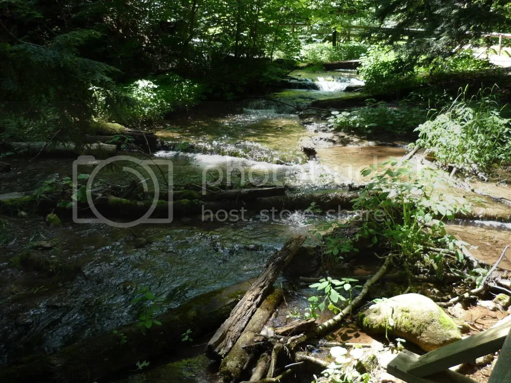 forest Pictures, Images and Photos